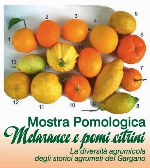 mostra pomologica_thumb[1]