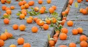 Orange Fiber: è il tessuto inventato da due siciliane utilizzando gli scarti delle arance