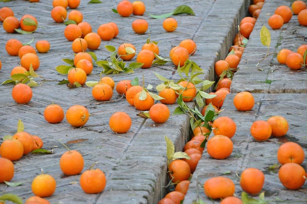 oranges-425145_1280