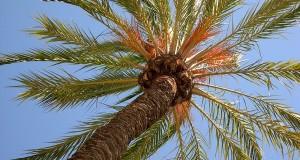 I 100 biscotti senza olio di palma. Virtù e pericoli di un ingrediente utilizzato dall'industria alimentare