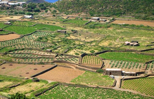 pantelleria_campi