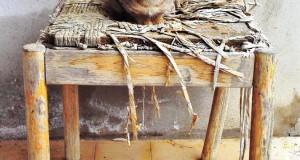 Gatti lucani, di Francesco La Centra