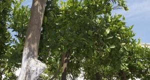 Giardino degli aranci ad Ostuni, scatto segnalato dalla pugliese Beatrice Schiriello