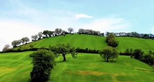 Racconta il tuo SUD   Primavera sulle colline di Tarsia, di Gianni Termine