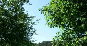 Sila Officinalis: cinque giorni per scoprire il patrimonio botanico della grande selva calabrese