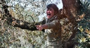 Xylella. A Oria forze dell'ordine in assetto antisommossa per il taglio degli ulivi:  sconcerto per sindaco e popolazione