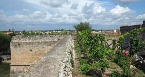 E' in Puglia, a Copertino, il primo vigneto pensile d'Europa