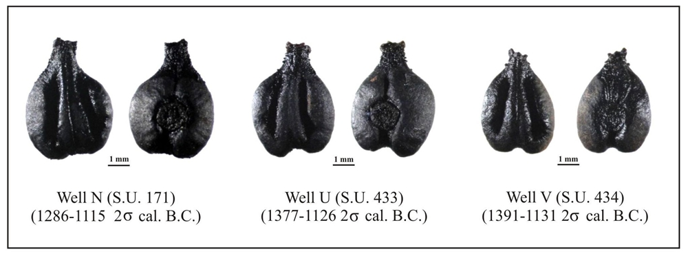 Gli antichi semi di vite ritrovati in Sardegna - Ph. CCB